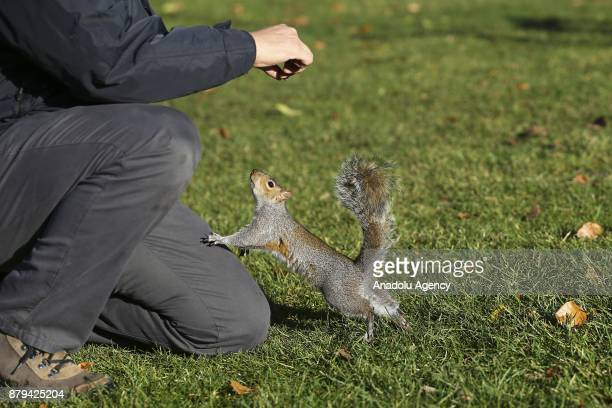 A man feeds the squirrel during the last days of autumn at Hyde Park on October 26 2017 in London England