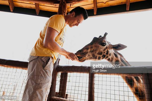 man feeing giraffe - hugh sitton stock-fotos und bilder