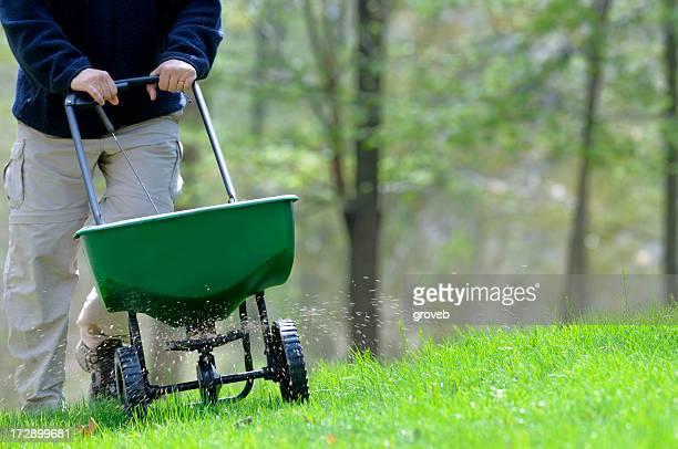 A man fertilizing a grassy lawn