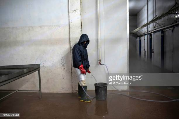 A man fills a bucket with water at the Valentine Chicken Abattoir on July 11 2017 Farming in Nigeria is not for the fainthearted Intermittent...