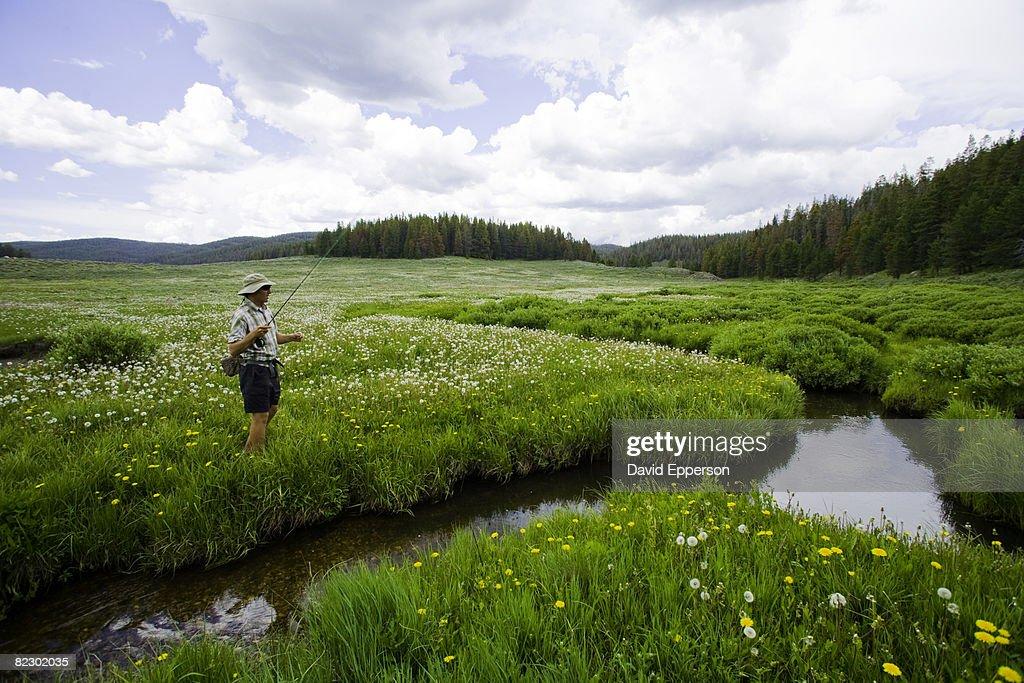 Man Fly Fishing Colora : Stock Photo