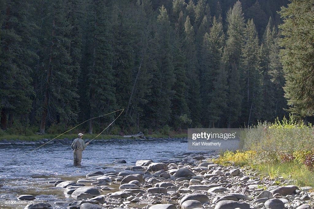 Man fly fishing, rear view : Stock Photo