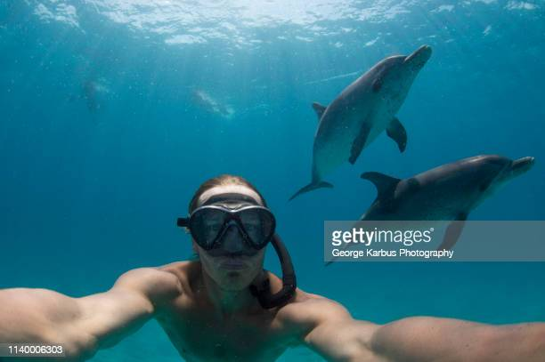 man free diving with atlantic spotted dolphins, bimini, bahamas - dolphin stock pictures, royalty-free photos & images