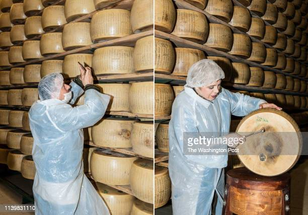 A man from a group of visitors takes a picture of the wheels of Parmigiano Reggiano in the room where they mature from a period of eight to 35 months...