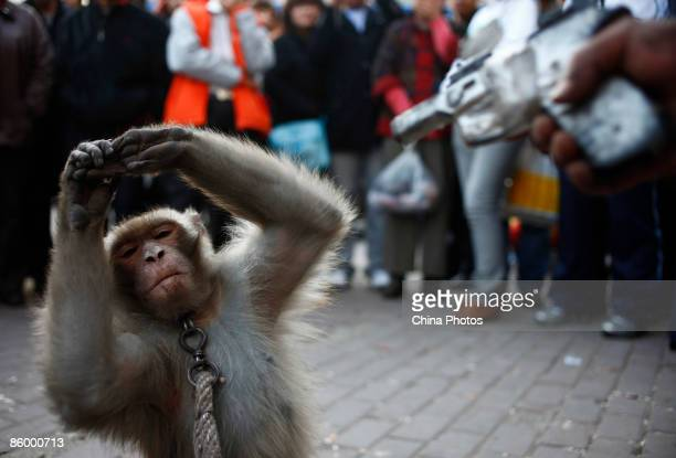A man from Henan Province points a gun at his monkey as he puts on a show for a small crowd of onlookers on April 16 2009 in Changchun of Jilin...