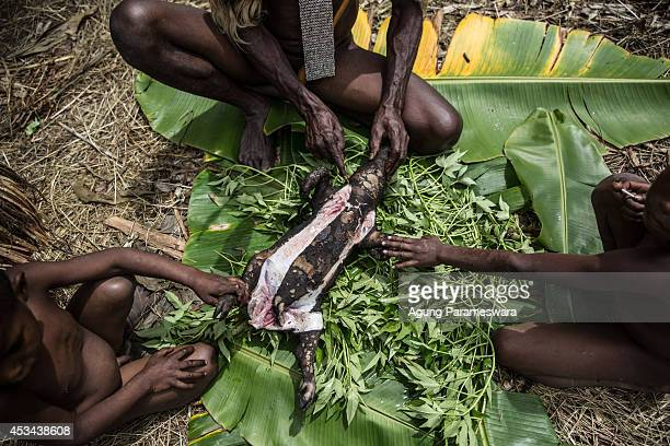 Man from the Dani tribe cuts the head of a pig after cooked by traditional way which is use burned hot stones at Obia Village on August 9, 2014 in...