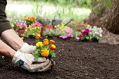 Man Gardening Background