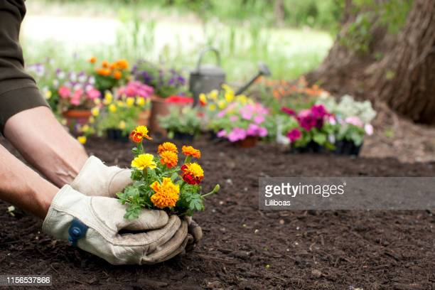 man gardening background - springtime stock pictures, royalty-free photos & images