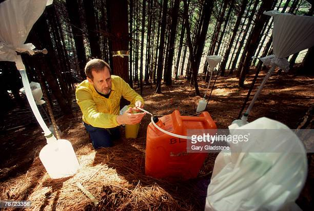 Man gathering rain samples in forest