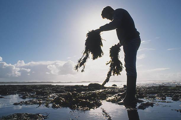 Gathering Seaweed Wall Art