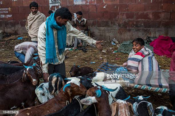A man gestures to his assistant for some help as goats are offered for sale for Eid alAdha near to the Jama Masjid on October 27 2012 in New Delhi...