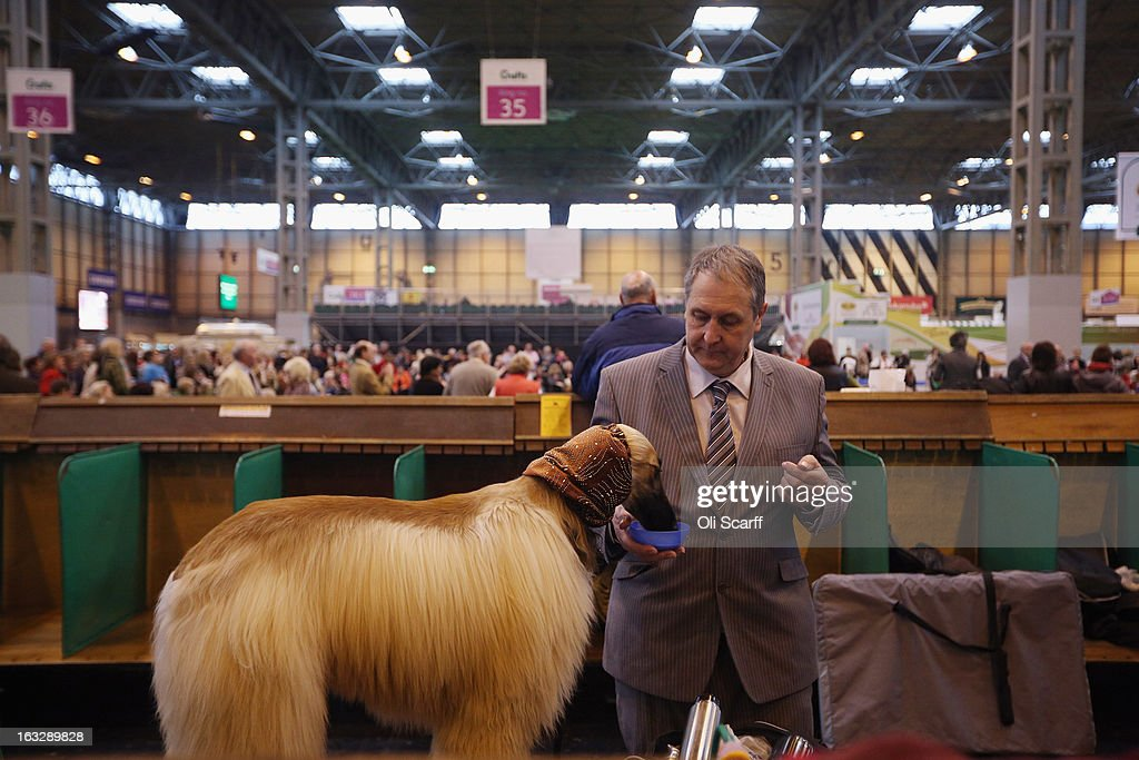 A man gives his Afghan hound a drink after being shown on the first day of Crufts dog show at the NEC on March 7, 2013 in Birmingham, England. The four-day show features over 25,000 dogs, with competitors travelling from 41 countries to take part. Crufts, which was first held in1891, sees thousands of dogs vie for the coveted title of 'Best in Show'.