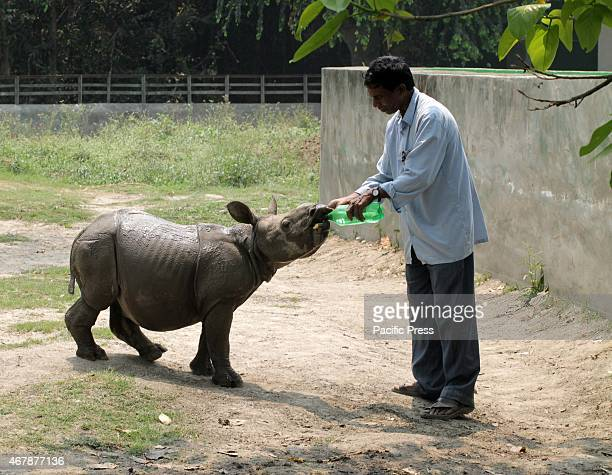 A man gives water to the baby rhino in Alipur Zoo