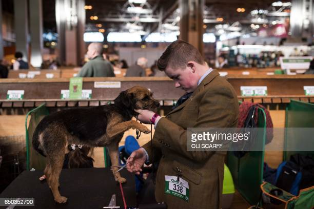 Man grooms a Border Terrier before it is judged on the first day of the Crufts dog show at the National Exhibition Centre in Birmingham, central...