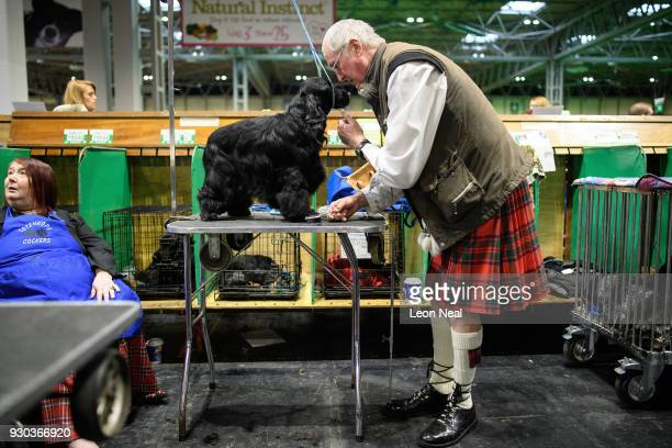 A man grooms his Cocker Spaniel ahead of judging on day four of the Cruft's dog show at the NEC Arena on March 11 2018 in Birmingham England The...