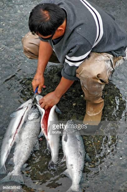 Man gutting freshly caught siver salmon in Alaska