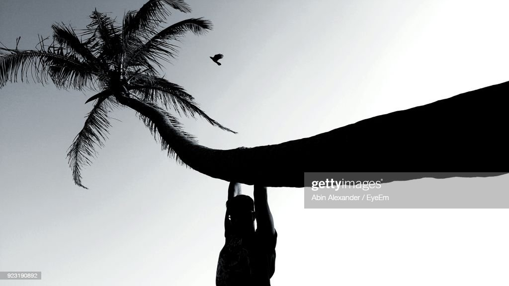 Man Hanging On Palm Tree Against Sky Stock Photo