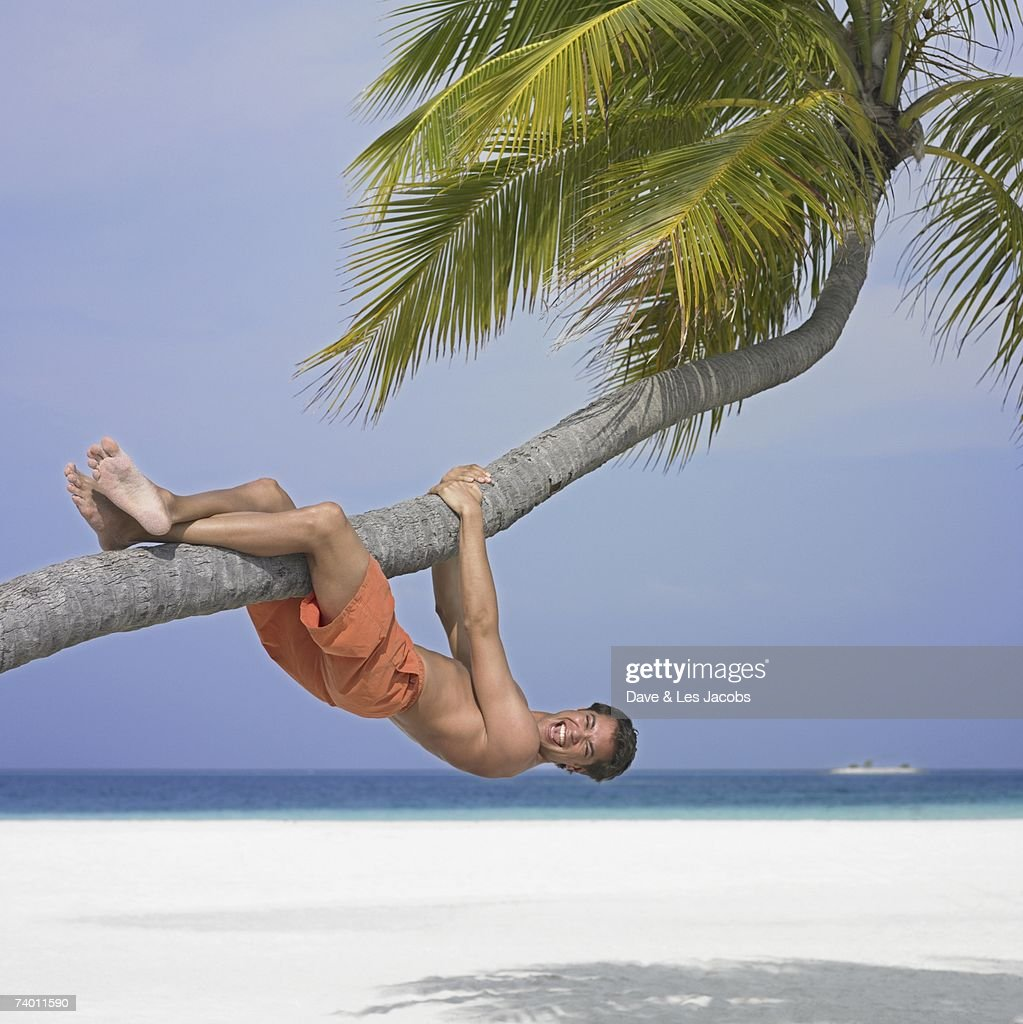 Man hanging on palm tree at beach stock photo getty images man hanging on palm tree at beach stock photo voltagebd Image collections