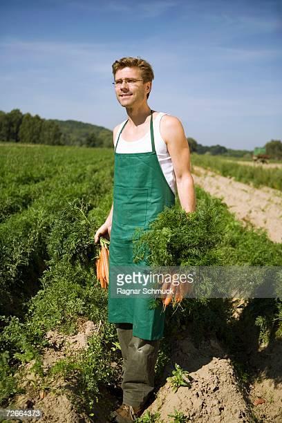 man harvesting carrots in field - landwirtschaftliche tätigkeit stock-fotos und bilder