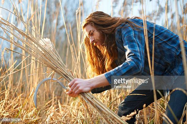 Man harvesting wheat with scythe