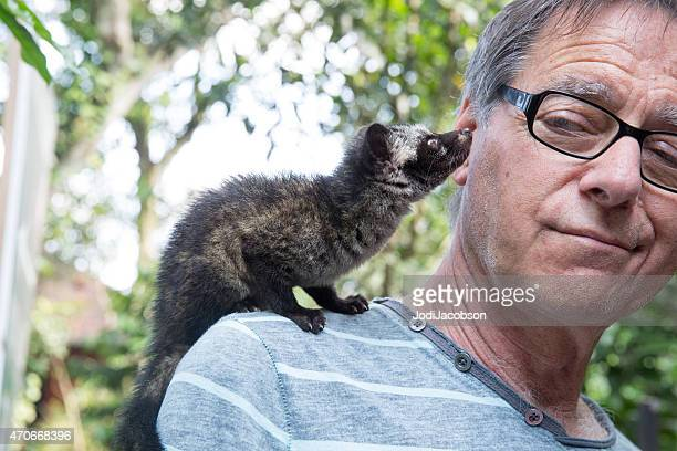 man has asian palm civet in shoulder in bali  rm - civet cat stock photos and pictures