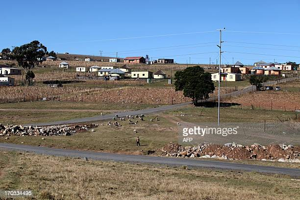 A man herds his sheep across an open patch of ground on June 11 2013 in Qunu near Mthatha in the Eastern Cape where former South African president...