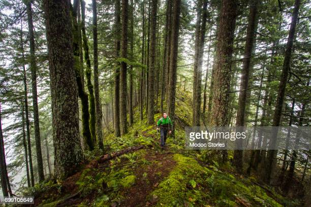 ruckel ridge, oregon. a man hiking alone in the woods looks up into the canopy as he climbs a mossy ridge on a foggy, misty afternoon. - columbia river gorge stock pictures, royalty-free photos & images
