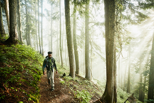 Man hiking along trail in forest on foggy morning - gettyimageskorea