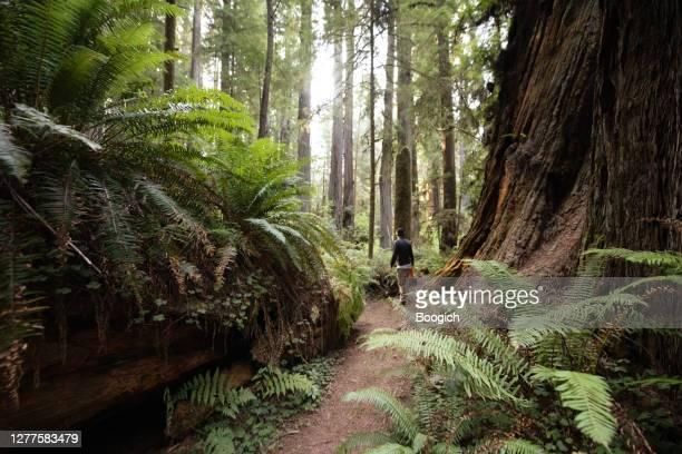 man hiking by ferns growing on redwood national park forest trail in california - reality fernsehen stock pictures, royalty-free photos & images
