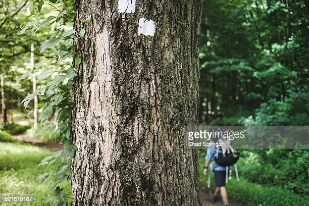 man hiking in forest with tree trunk in foreground - トレイル表示 ストックフォトと画像