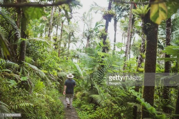 senderismo hombre en lush tropical rainforest el yunque national forest en puerto rico - paisajes de puerto rico fotografías e imágenes de stock
