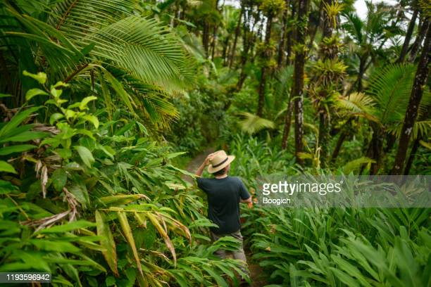randonnée d'homme dans la forêt tropicale luxuriante el yunque forêt nationale à porto rico - porto rico photos et images de collection