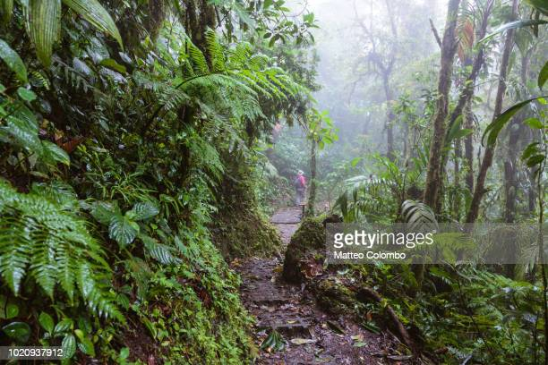 man hiking in monteverde cloud forest, costa rica - humid stock pictures, royalty-free photos & images