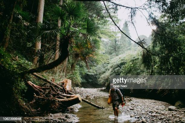 Man hiking in stream in lush green forest, Japan