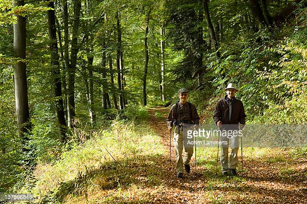 man hiking in woods - achim lammerts stock-fotos und bilder