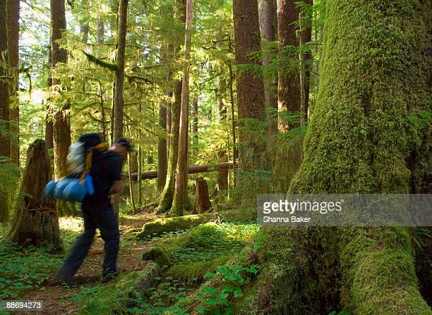 man hiking on rainforest trail - carmanah walbran provincial park stock pictures, royalty-free photos & images