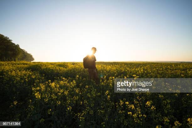 a man hiking through canola fields at dawn - キャノーラ ストックフォトと画像