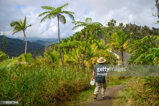 man hiking with water el yunque national forest in puerto rico - humid stock pictures, royalty-free photos & images