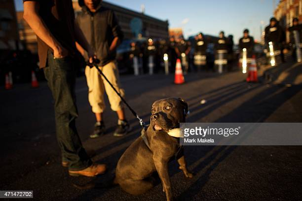 Man, his 9 month old puppy, and riot police are illuminated by late afternoon light as they line the street to form a blockade on April 28, 2015 in...