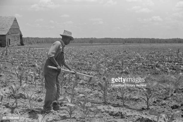 Man Hoeing Corn Field Flint River Farms Georgia USA Marion Post Wolcott for Farm Security Administration May 1939