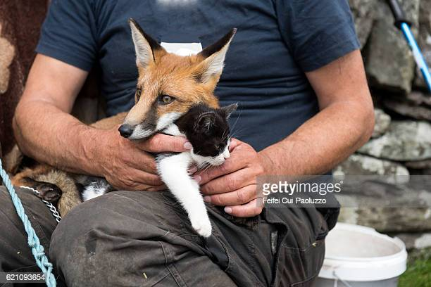A man hold a fox and a baby cat at Coomakesta Pass of Ireland