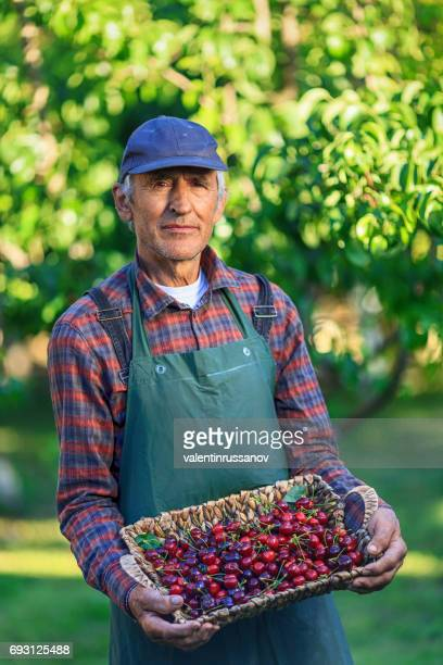 Man holding a basket with cherry fruits