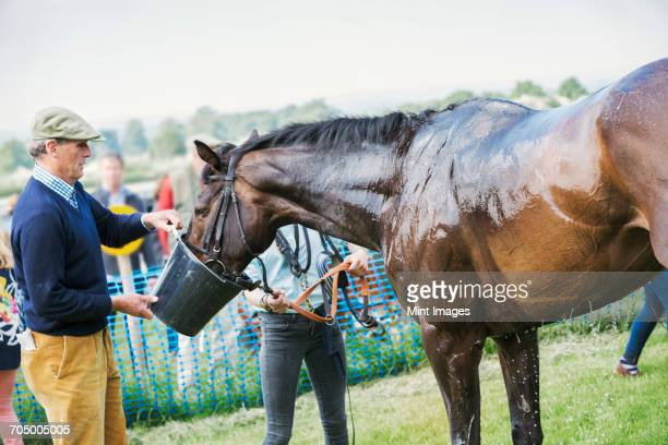 Man holding a bucket, giving water to a sweating race horse after a race.