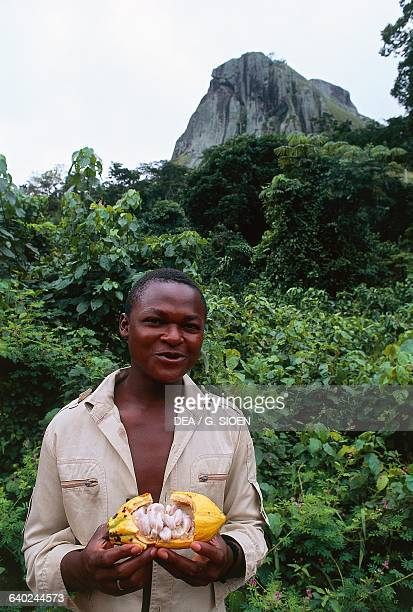 A man holding a cocoa pod with Ako'Akas rock in the background rising up above the tropical forest Ebolowa Cameroon