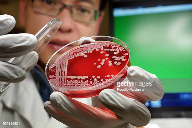 Man holding a culture plate of MRSA bacteria