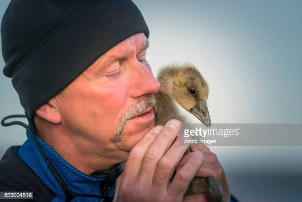 man holding a duckling. - duckling stock pictures, royalty-free photos & images