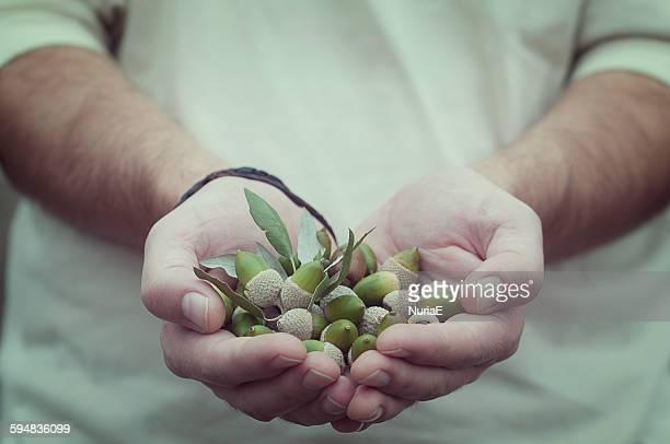 Man holding a handful of acorns