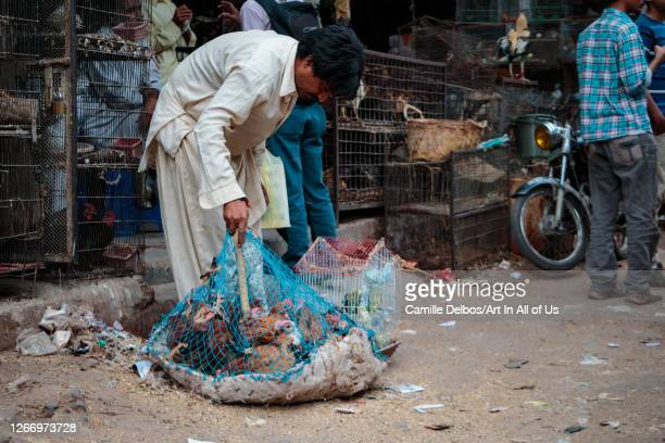 Man holding a net with captive chickens on Avril 19, 2016 in Karachi, Sindh, Pakistan.