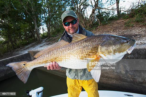 man holding a redfish (sciaenops ocellatus) - redfish stock photos and pictures