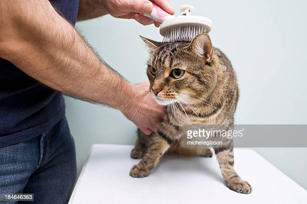 Man holding and grooming a cat on a white table